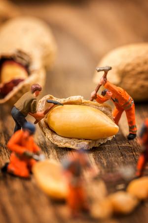 Miniature figures working on peanuts macro photography on wood table Stock Photo