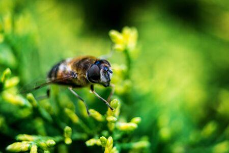 The fly on the green leaf  macro photography Фото со стока