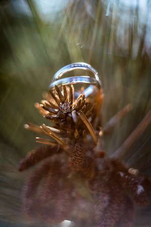Beautiful jewel wedding rings closeup macro photography