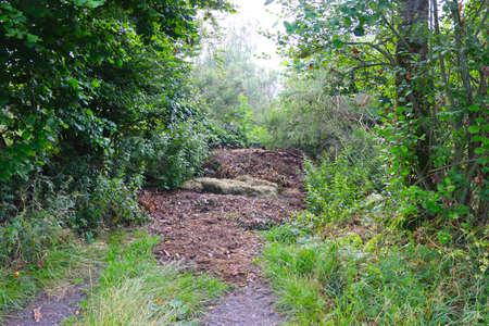 Disposed garden waste in the forest Stok Fotoğraf