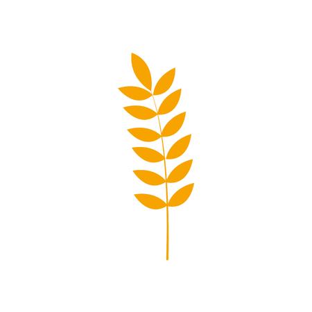 Zdrowe rośliny pszenicy odżywcze.