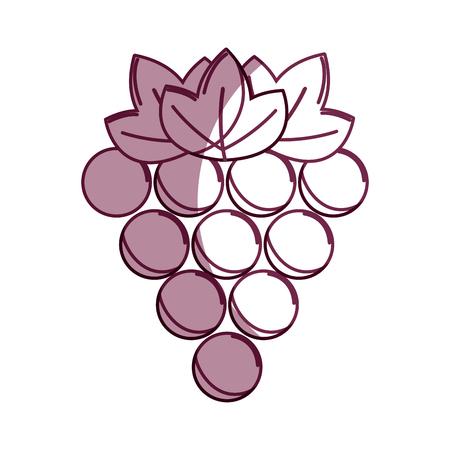 Silhouette delicious grape healthy fruit.