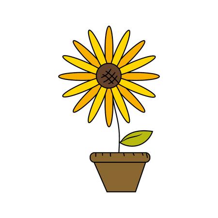 beautiful sunflower in the flowerpot