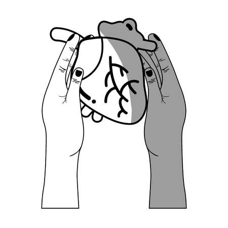 line heart organ to blood circulation in the hands Illustration