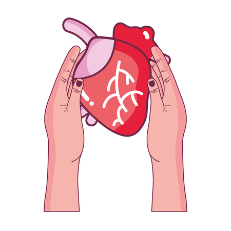 vena: heart organ to blood circulation in the hands