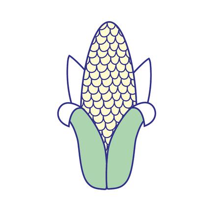 sweetcorn: delicious cob to eat organic food vector illustration