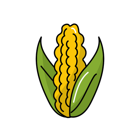 delicious and healthy cob corn food vector illustration