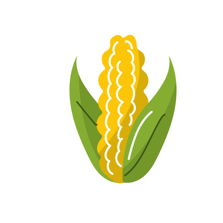 corncob: delicious and healthy cob corn food vector illustration