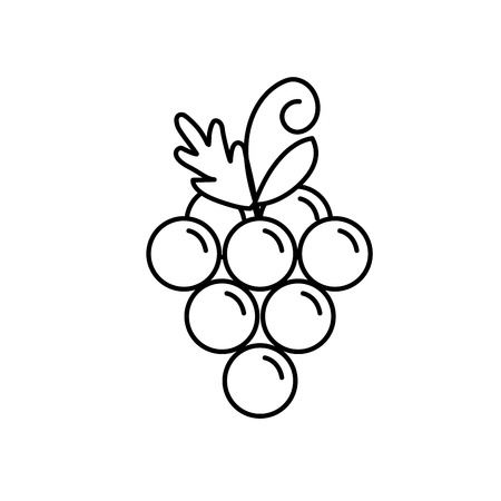 line delicious and healthy grape fruit vector illustration