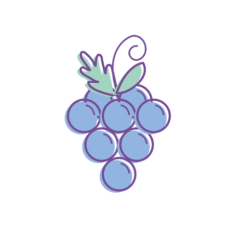 delicious and healthy grape fruit vector illustration Illustration