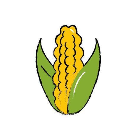 A delicious and healthy cob corn food, cartoon illustration.
