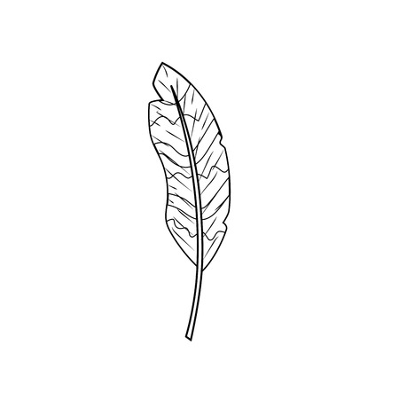 Line beautiful feather style with decoration design