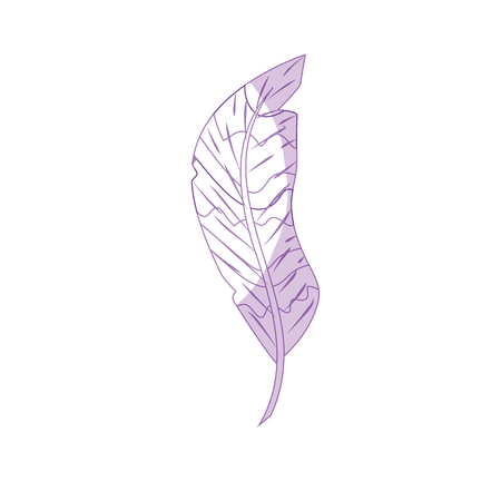 Silhouette beauty feather style with decoration design vector illustration