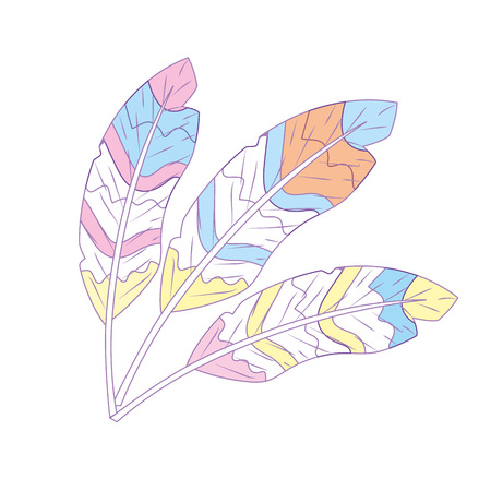 Beauty feathers style with decoration design vector illustration