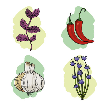 set herbs and spices plants and organ food vector illustration
