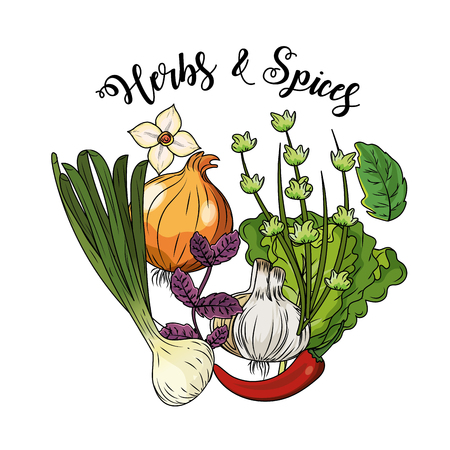 Herbs and spices plants and organ food vector illustration