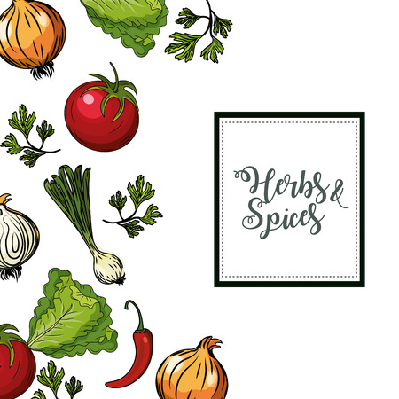 allspice: Herbs and spices plants and organ food background vector illustration