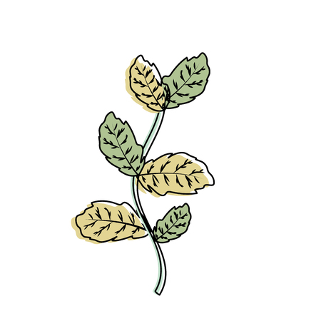 nice plant ingredient to condiment of food Illustration