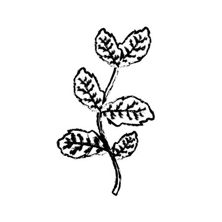 allspice: figure nice plant ingredient to condiment of food