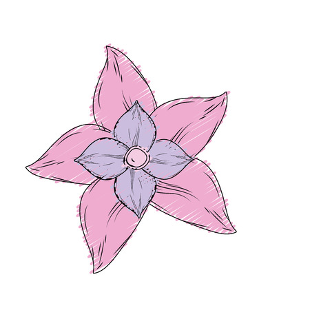 beauty flower with petals to decorative design Illustration