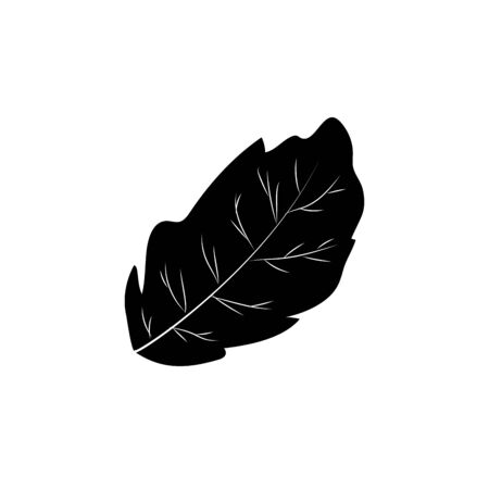 allspice: contour peppermint leaf plant and natural condiment