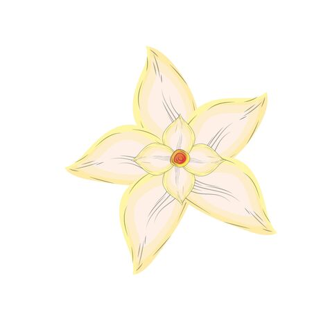 allspice: Chamomile flower with petals to organic ingredient