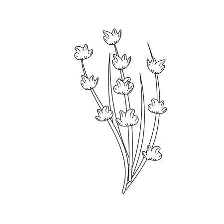 line plant ingredient to condiment of food vector illustration Illustration