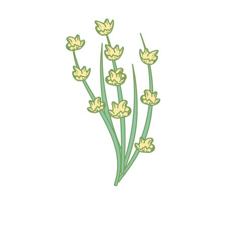 Poppy plant ingredient to condiment of food Illustration