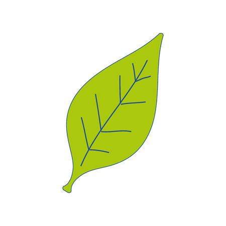 details: natural tropical leaf and exotic decoration vector illustration