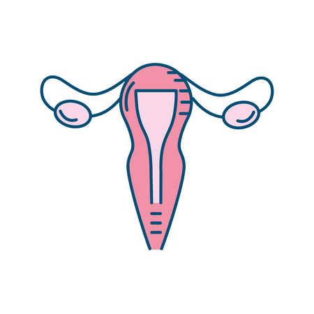 uterus fallopian tubes anatomy female