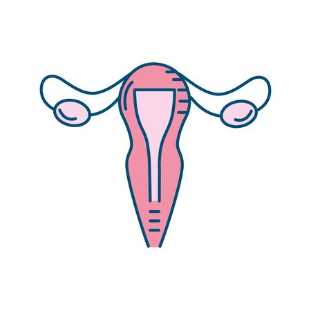 Uterus Eileiter Anatomie weiblich