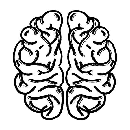 figure cerveau humain anatomie à l & # 39 ; illustration créative et vecteur de l & # 39 ;