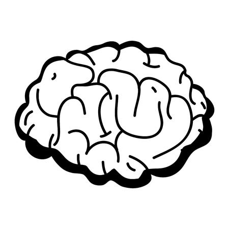 contour human brain anatomy to creative and intellect