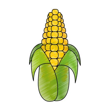 Isolated corn design vector Illustration