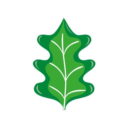 colorful tropical kale leal natural plant vector illustration Illustration