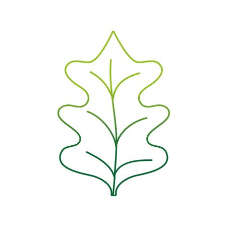 color line tropical kale leal natural plant vector illustration
