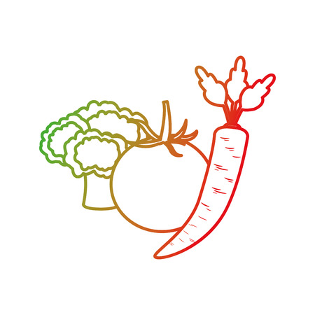 Broccoli tomato and carrot of vegetable healthy and organic food theme Isolated design Vector illustration