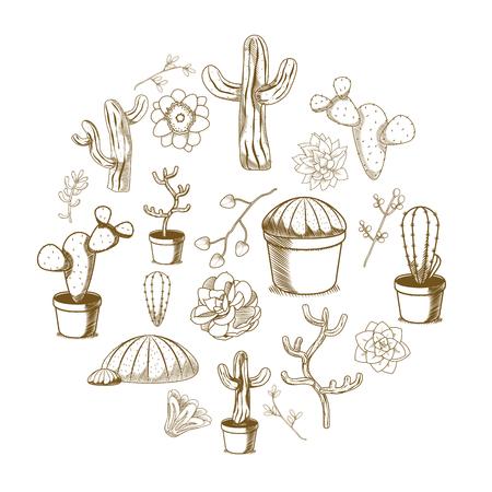 Succulent and cactus desert plants vector illustration graphic design