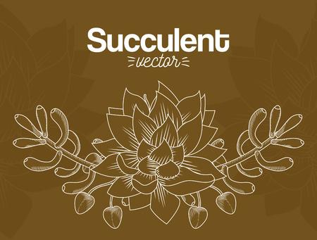 Succulent desert plants
