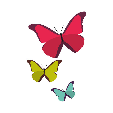 colorful beauty nature butterflys animal flying vector illustration