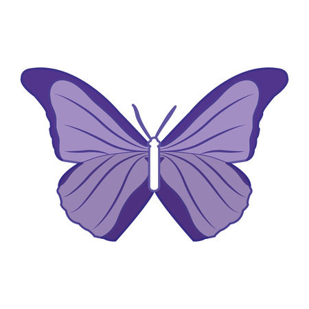 duo color beauty butterfly style animal to the spring vector illustration Illustration