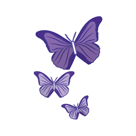 Duo color beauty nature butterflys animal flying Illustration