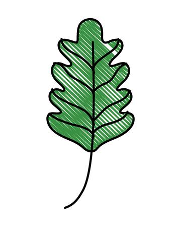 Kale leaf illustration Illustration