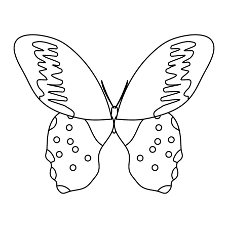 line beauty butterfly insect with nice wings vector illustration