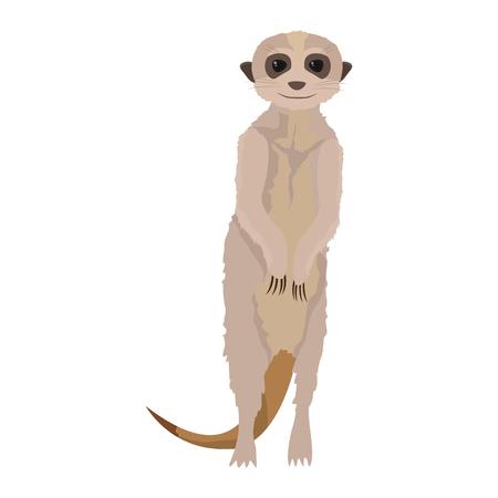 Cute meerkat wild animal in the desert illustration.