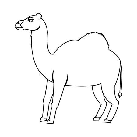 line cute nature dromedary desert animal vector illustration