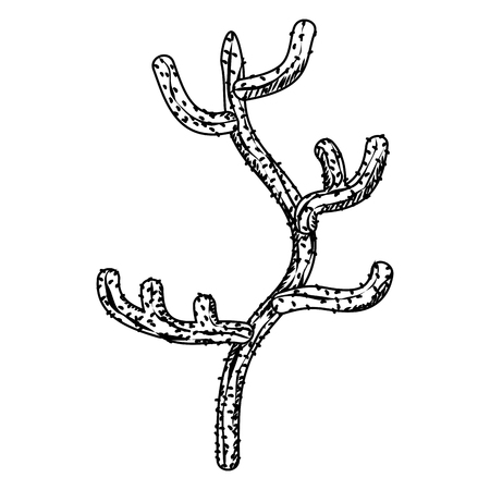 line ecology and nature desert cactus plant vector illustration