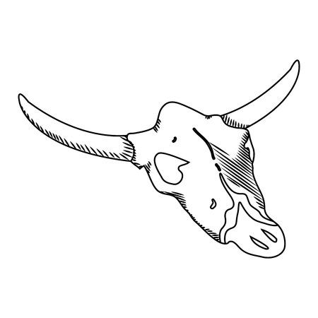 line nature buffalo desert dead skull vector illustration
