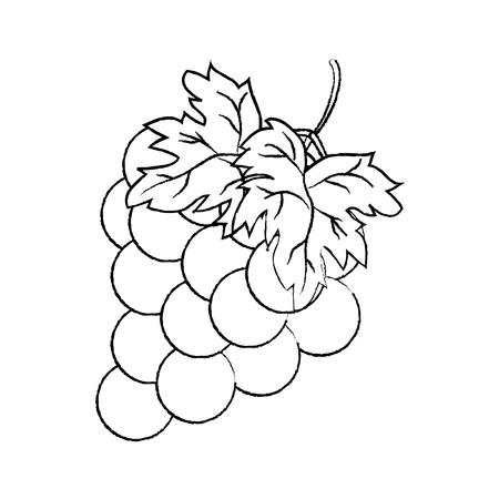 grunge delicious grape fruit organic tasty vector illustration Vettoriali