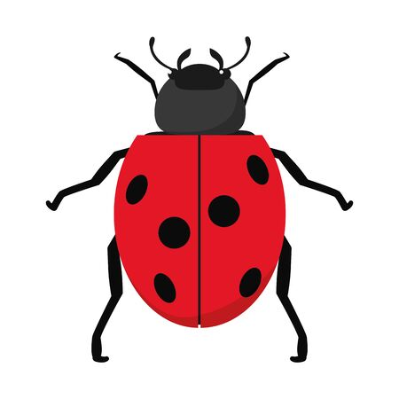 nature ladybug insect animal of spring vector illustration Illustration